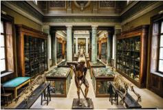 museum anatomy
